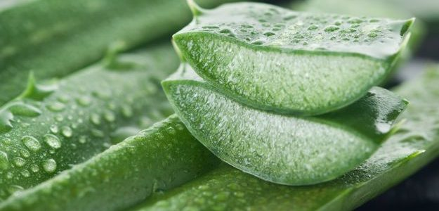 Nourish Your Skin Gently with The benefits of Aloe Vera